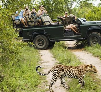 Cheetah Gamedrive