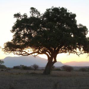 Big Five Trees